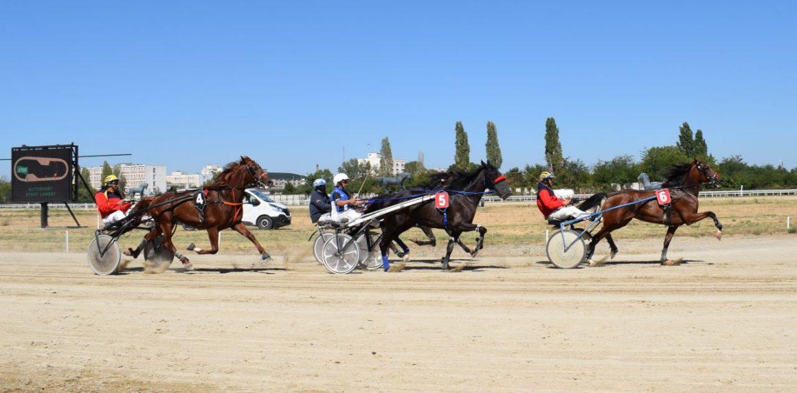 Hipodromul Ploieşti: duminică se ţine Premiul cailor de 2 ani!